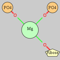 MgRNA type cis-2OP-OR